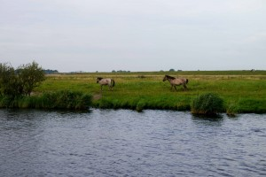 Canal Horses
