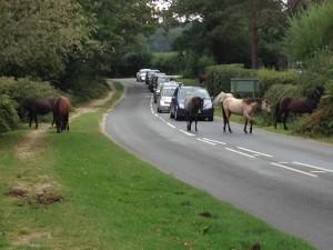 Bloody Ponies