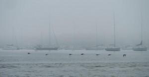 Foggy Newport Morning
