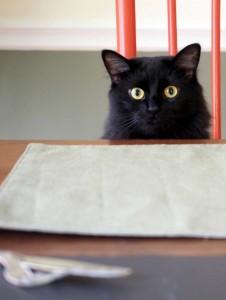Ship's Cat - Bella