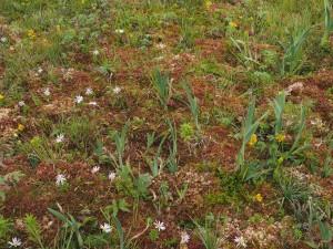 Diverse Newfoundland Flora